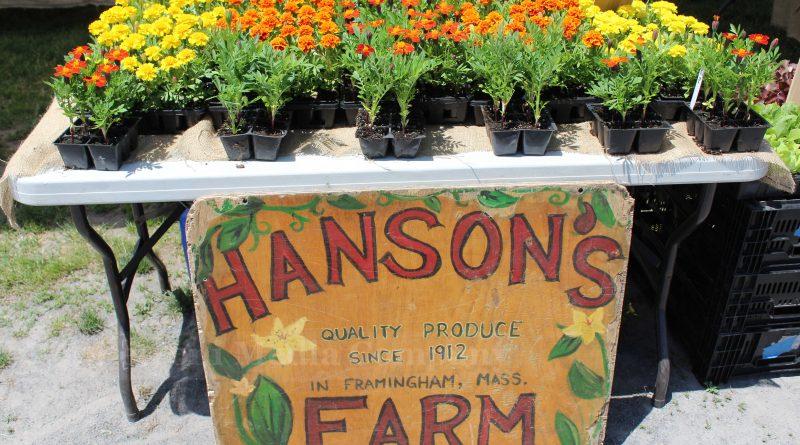 Framingham Farmers' Market Opens Thursday, June 14