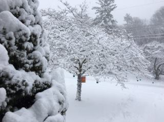 National Weather Service Reports 8.5 Inches of Snow For Framingham