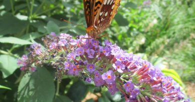 Photo of the Day: Butterfly In the Keefe Tech Garden