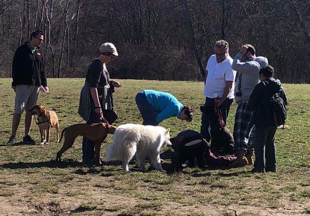 Dog Attacks, and Kills, Another Dog at Callahan State Park