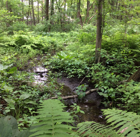 $25,000 in Donations Needed By June 30 To Protect Wayside Forest
