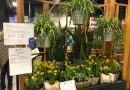 Keefe Tech Wins First Prize at Boston Flower & Garden Show