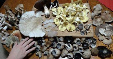 One Earth Collaborative Hosting Mushroom Foraging Workshop