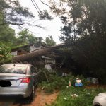 Photo of the Day: Tree Into House